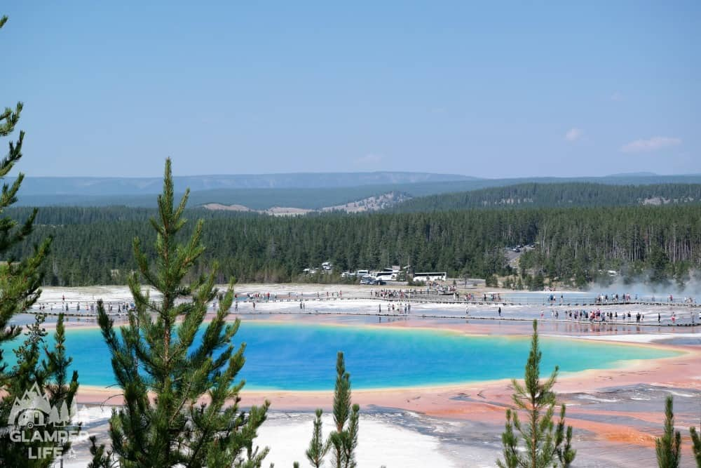 Grand Prismatic Spring Trees