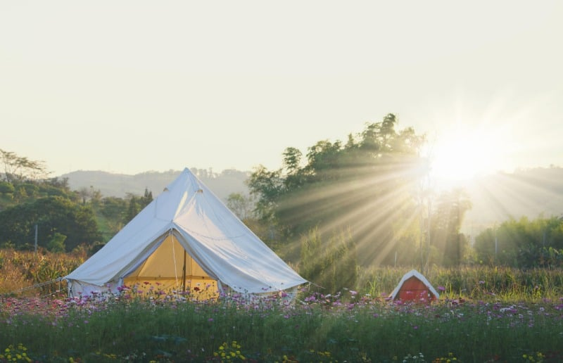 white glamping tent in wildflower field