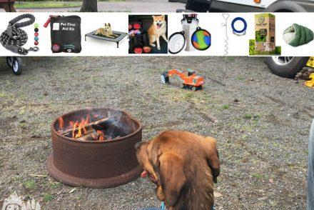 dog campground campfire rv