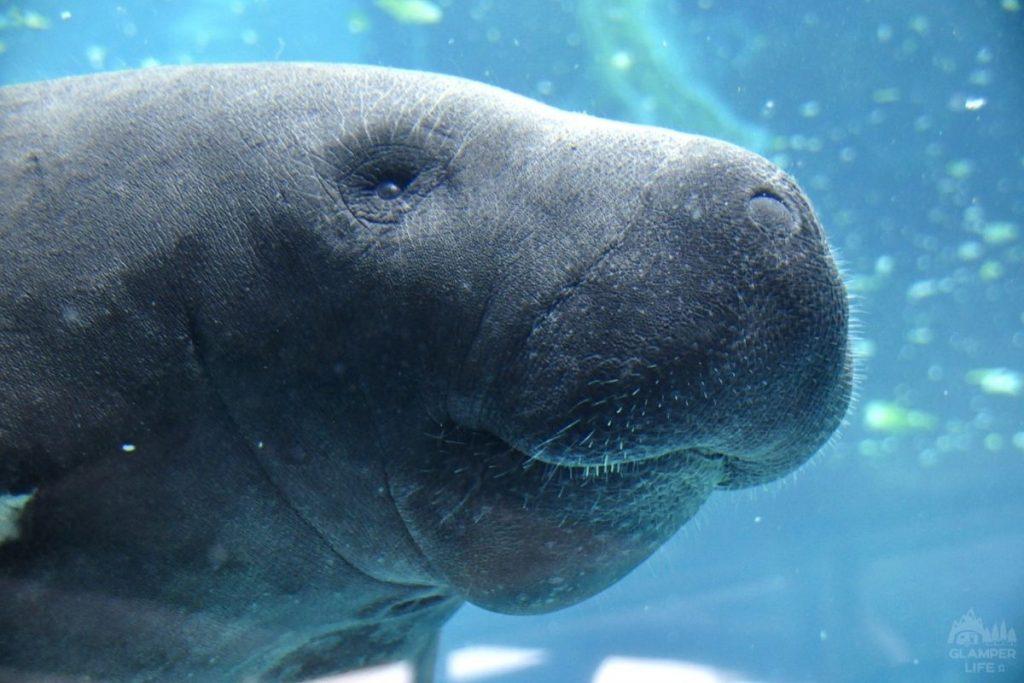 Manatee Aquarium