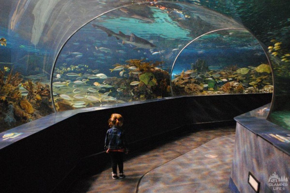 Ripleys Aquarium Gatlinburg
